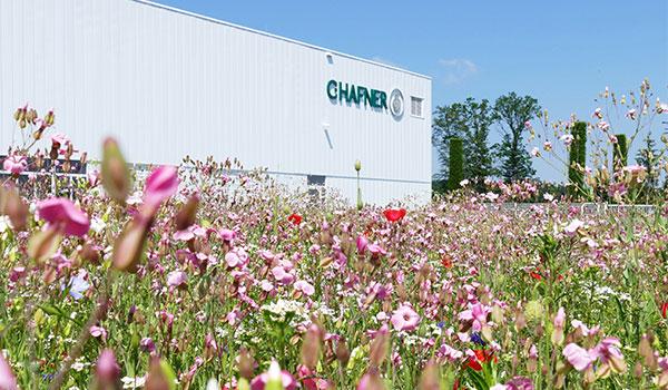 Firmengebäude im Hintergrund mit Blumenwiese