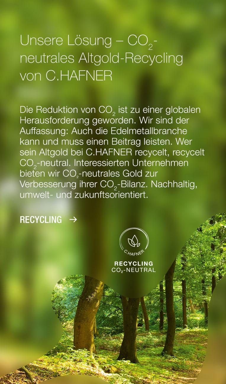 Bildstreifen mit Text und Wald Hintergrund